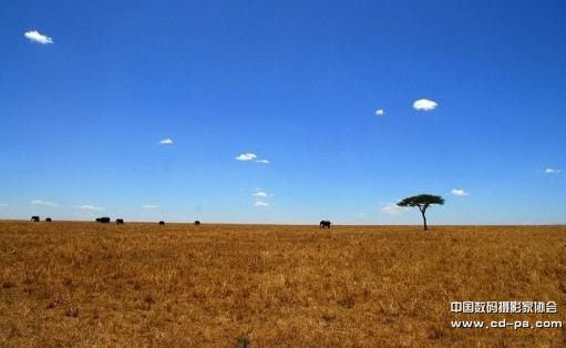 肯尼亚动物大迁徙专业摄影创作团